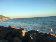 Malibu view from Duke's