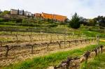 winery13